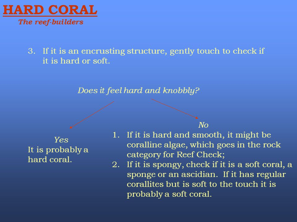 HARD CORAL The reef-builders. If it is an encrusting structure, gently touch to check if it is hard or soft.