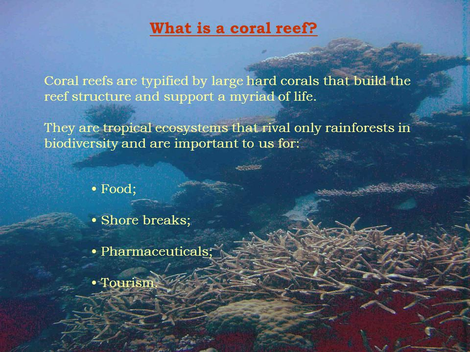 What is a coral reef Coral reefs are typified by large hard corals that build the reef structure and support a myriad of life.
