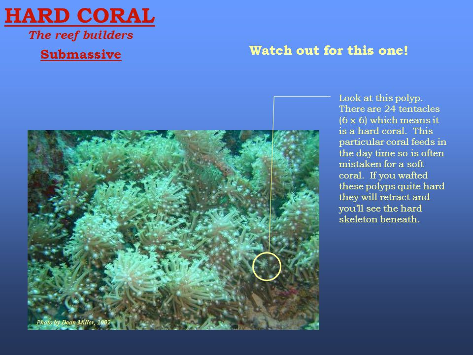 HARD CORAL Watch out for this one! Submassive The reef builders
