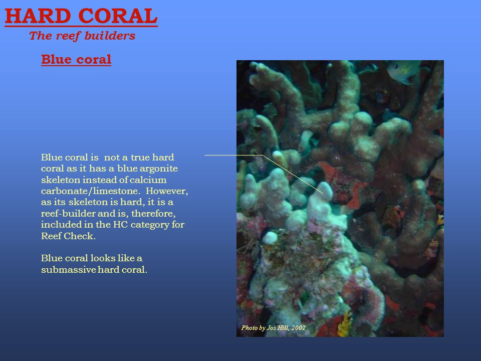 HARD CORAL Blue coral The reef builders
