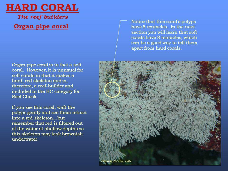 HARD CORAL Organ pipe coral The reef builders