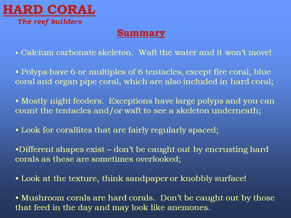 HARD CORAL The reef builders. Summary. Calcium carbonate skeleton. Waft the water and it won't move!