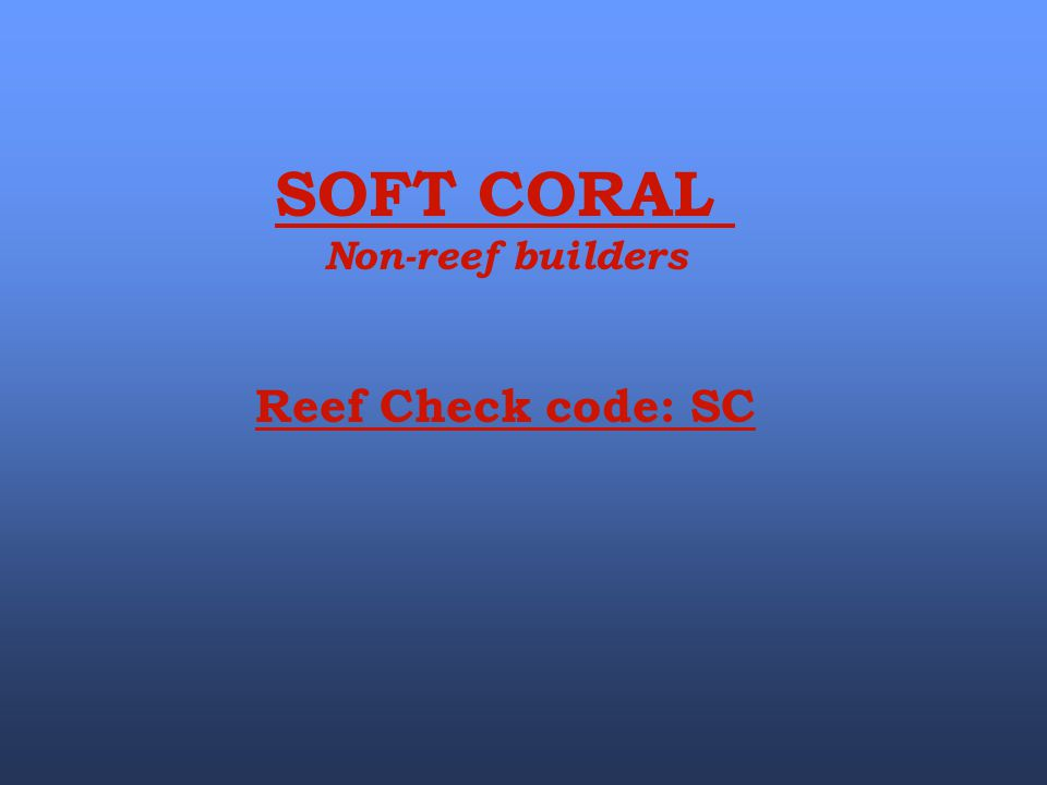 SOFT CORAL Non-reef builders Reef Check code: SC