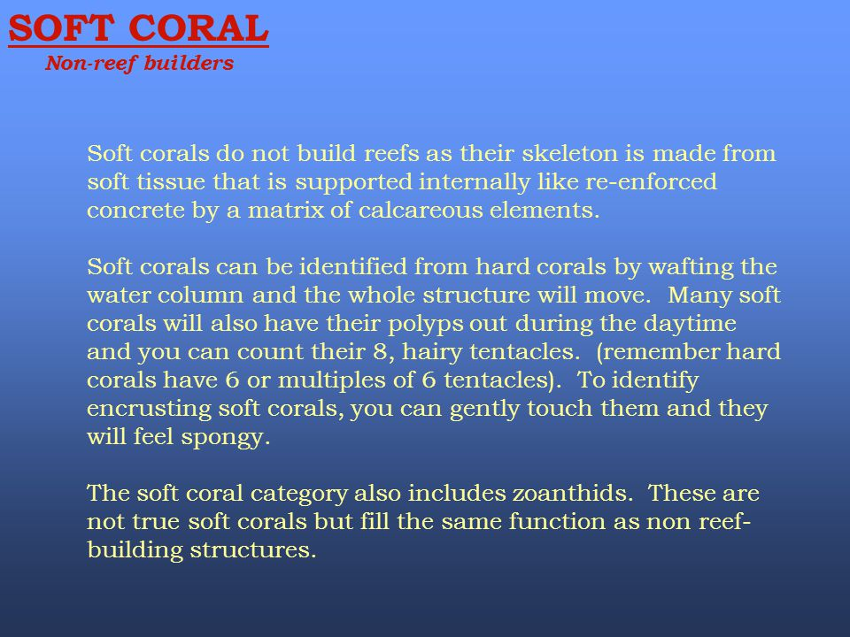 SOFT CORAL Non-reef builders.