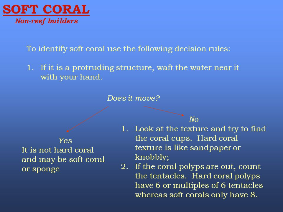 SOFT CORAL To identify soft coral use the following decision rules: