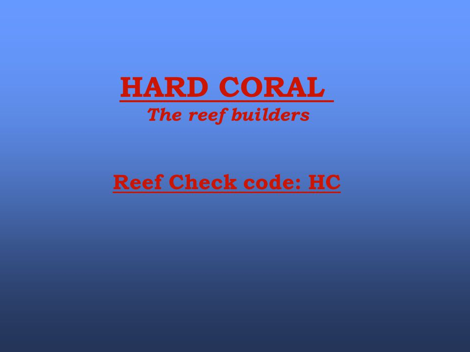 HARD CORAL The reef builders Reef Check code: HC