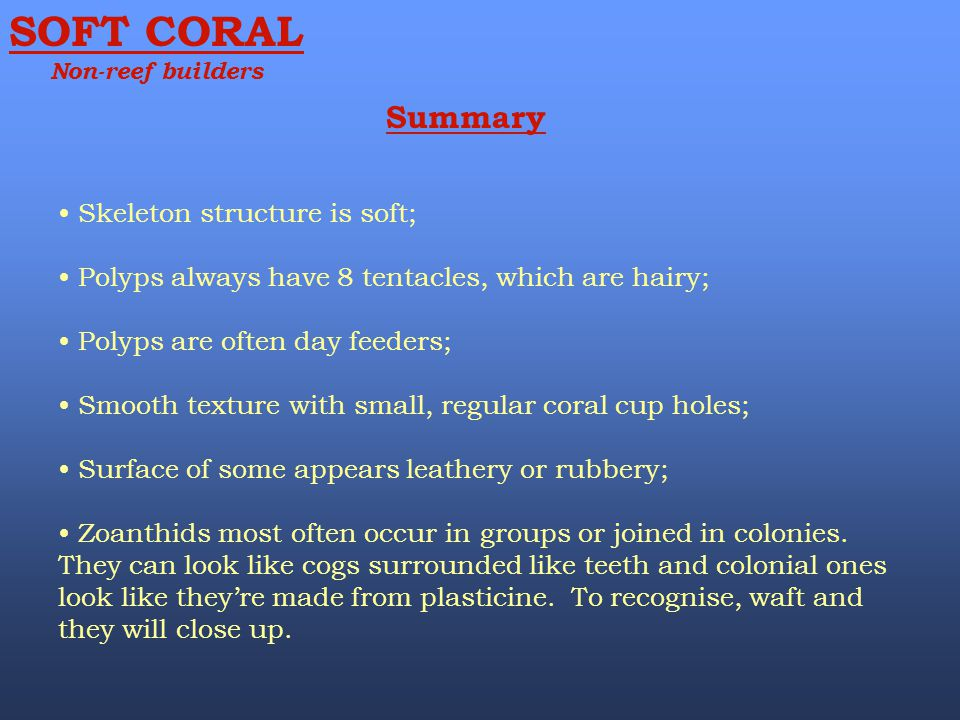 SOFT CORAL Summary Skeleton structure is soft;