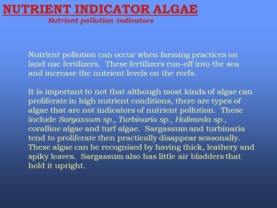 NUTRIENT INDICATOR ALGAE Nutrient pollution indicators