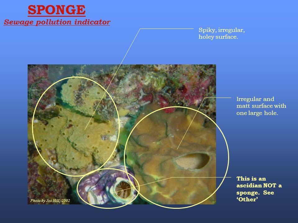 Sewage pollution indicator