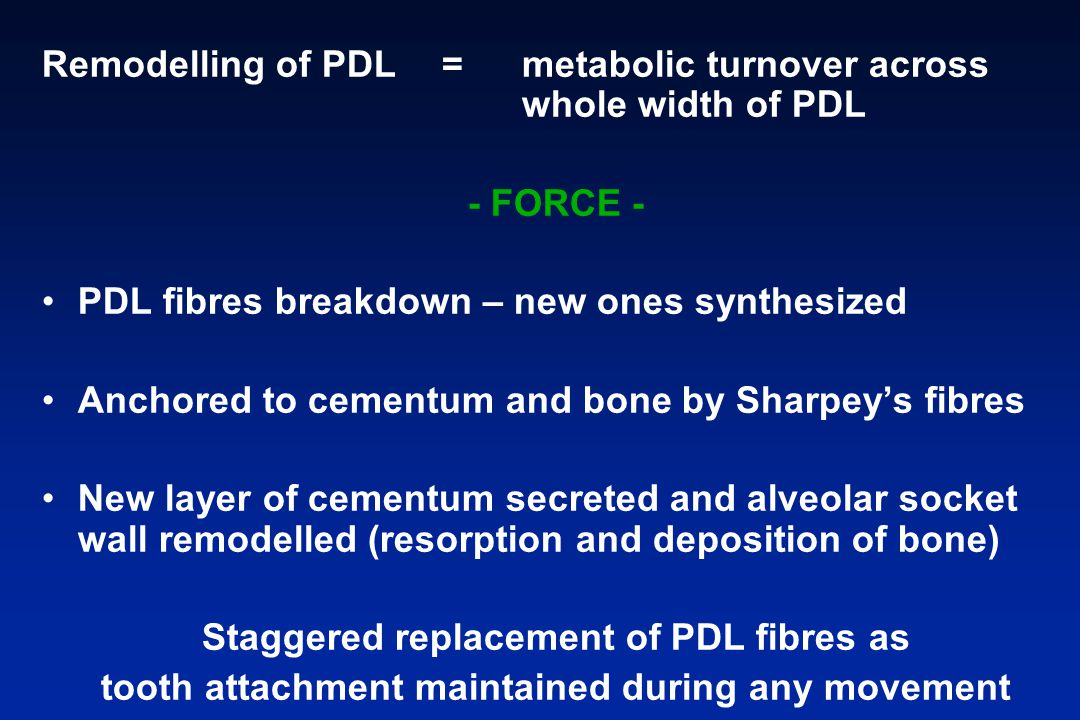 Remodelling of PDL = metabolic turnover across whole width of PDL