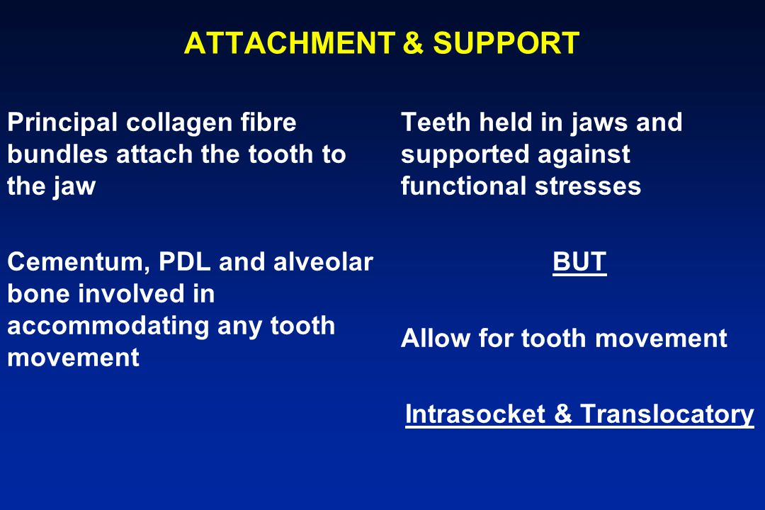 Intrasocket & Translocatory