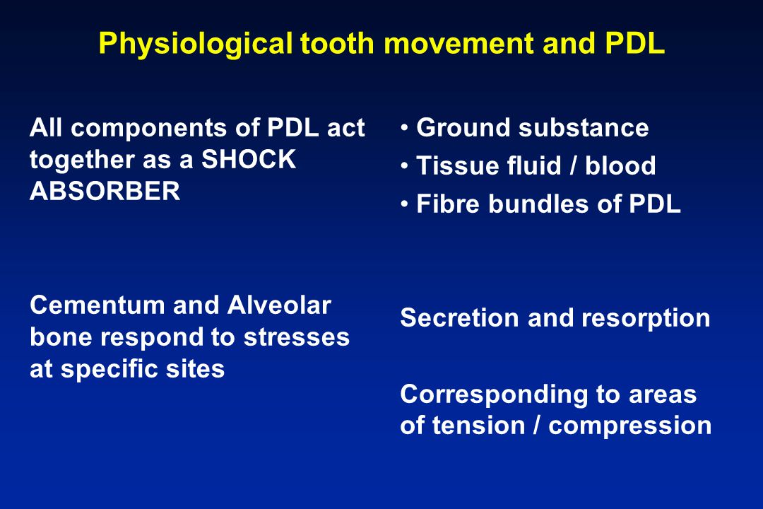 Physiological tooth movement and PDL