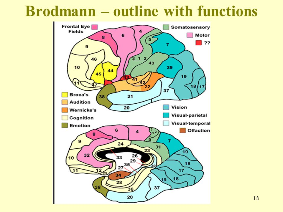Brodmann – outline with functions
