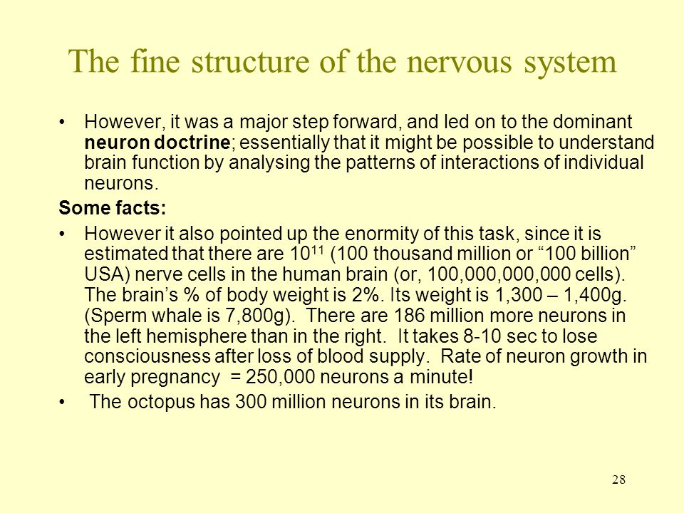 The fine structure of the nervous system