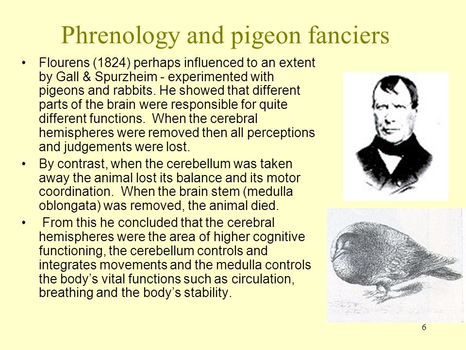 Phrenology and pigeon fanciers