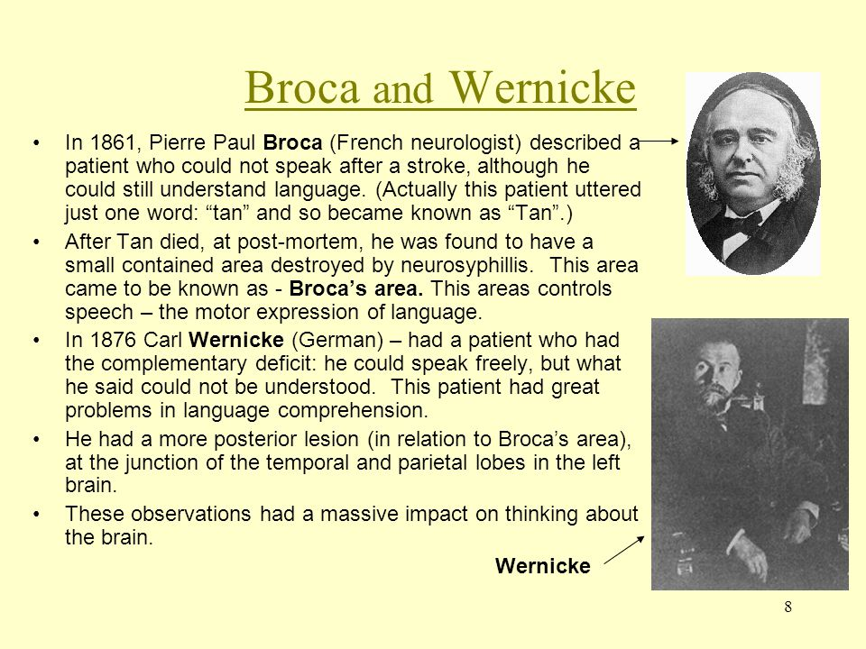 Broca and Wernicke