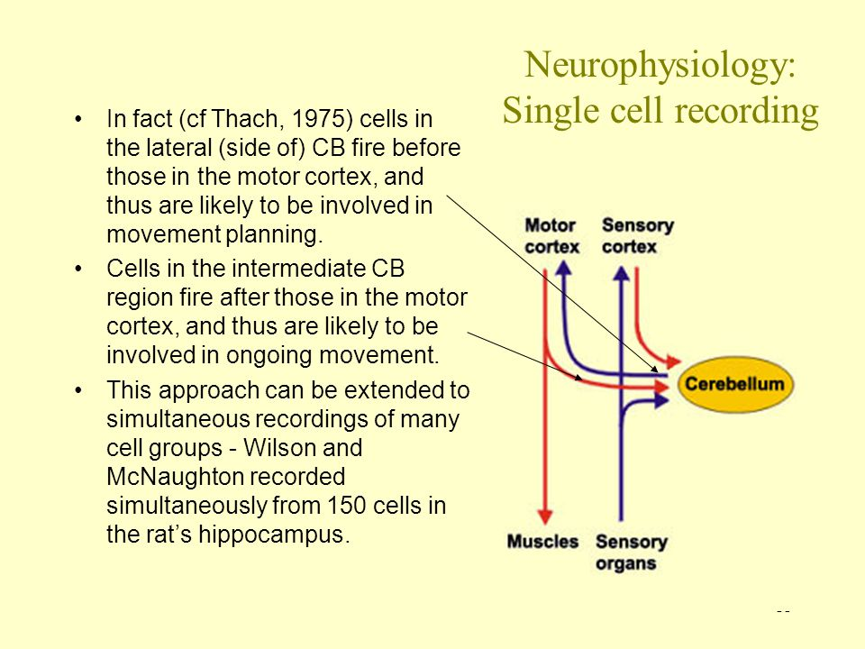 Neurophysiology: Single cell recording