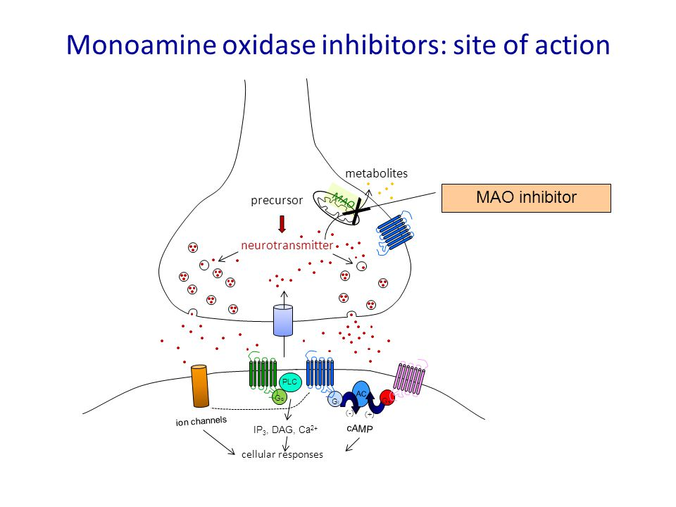 Monoamine oxidase inhibitors: site of action