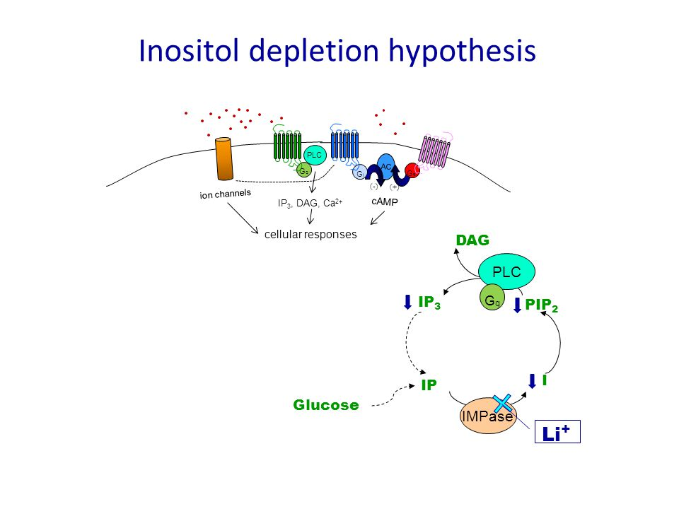 Inositol depletion hypothesis