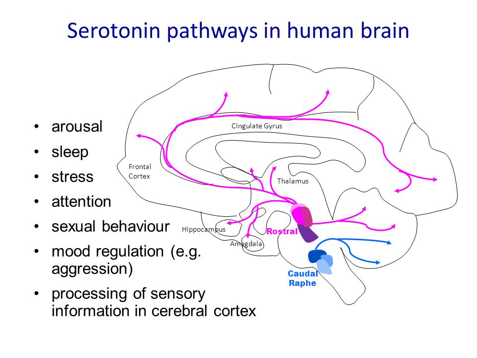 Serotonin pathways in human brain