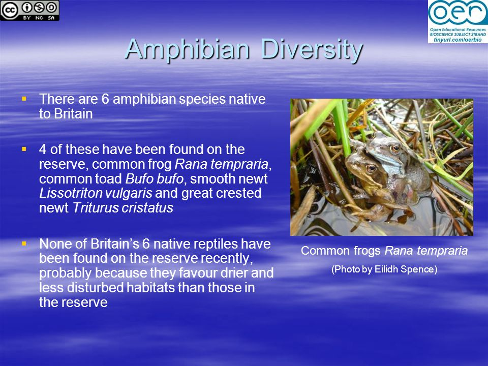 Amphibian Diversity There are 6 amphibian species native to Britain