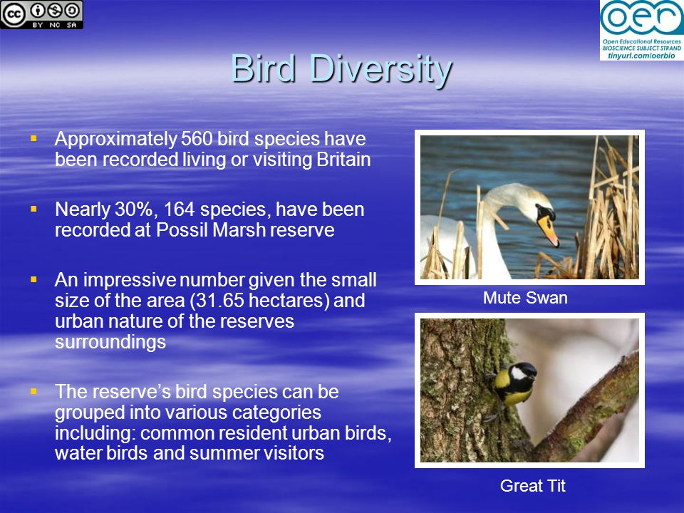 Bird Diversity Approximately 560 bird species have been recorded living or visiting Britain.