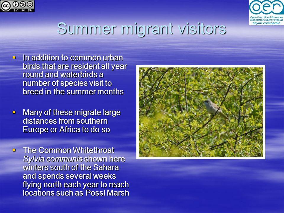 Summer migrant visitors