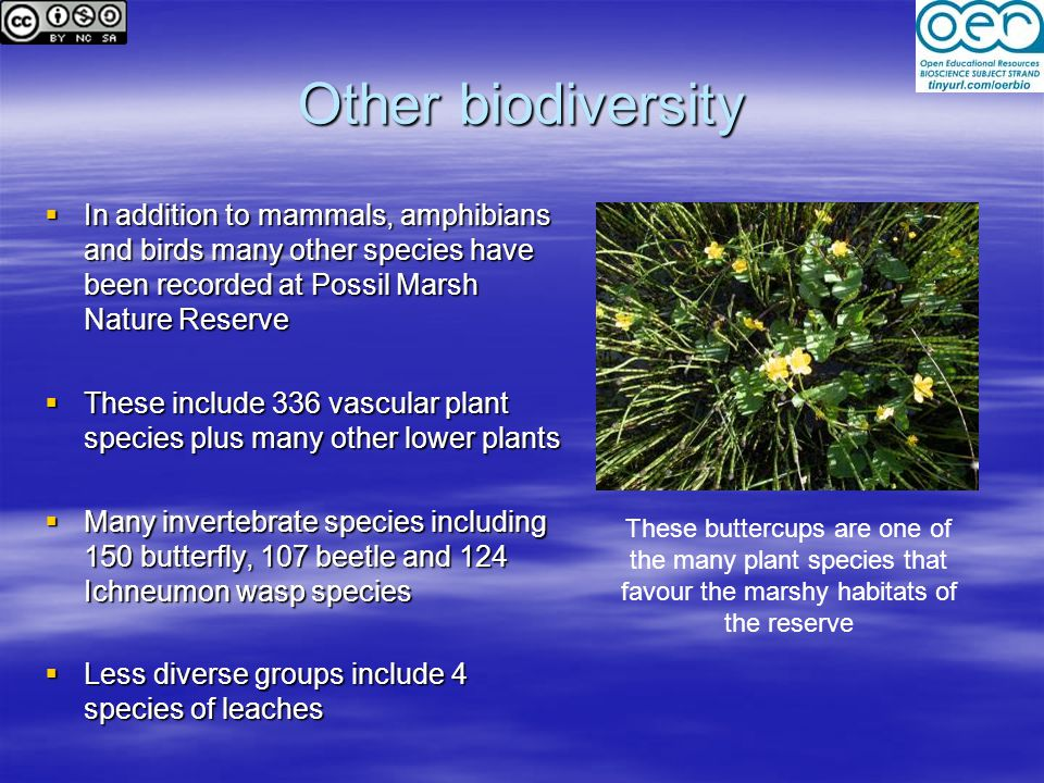 Other biodiversity In addition to mammals, amphibians and birds many other species have been recorded at Possil Marsh Nature Reserve.