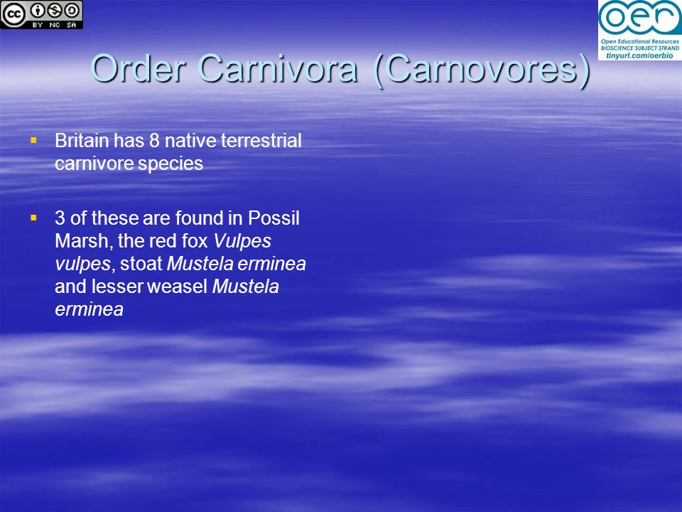 Order Carnivora (Carnovores)