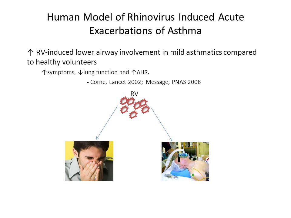Human Model of Rhinovirus Induced Acute Exacerbations of Asthma