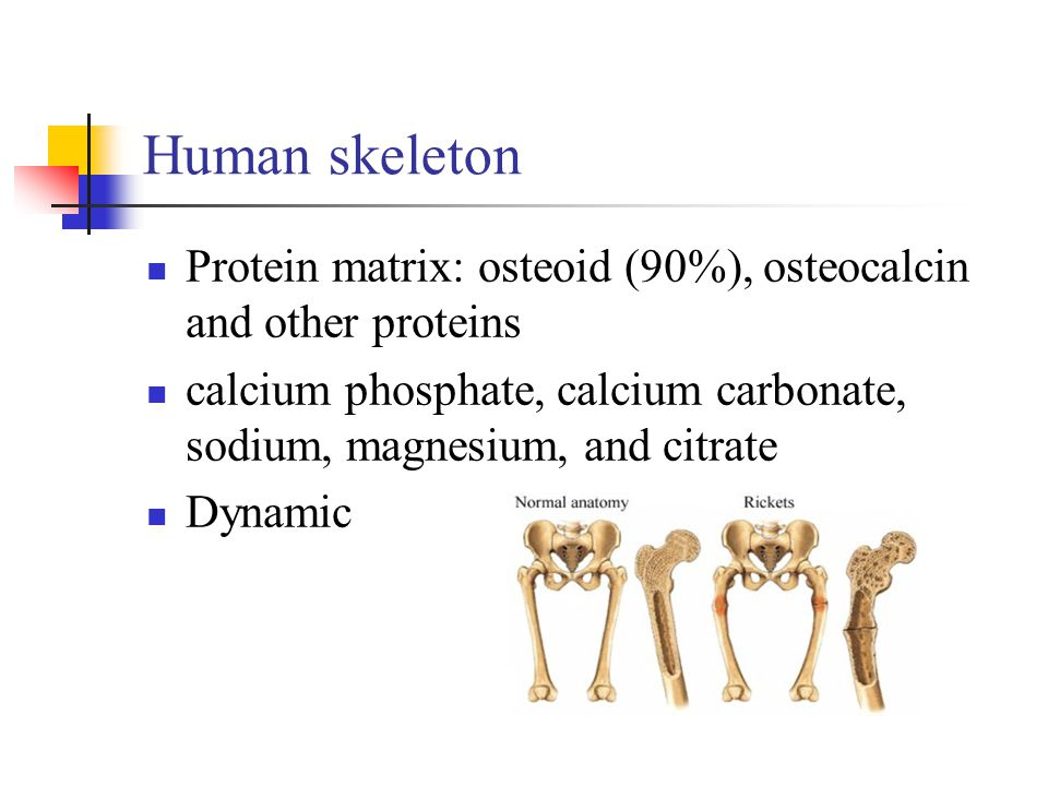 Human skeleton Protein matrix: osteoid (90%), osteocalcin and other proteins. calcium phosphate, calcium carbonate, sodium, magnesium, and citrate.