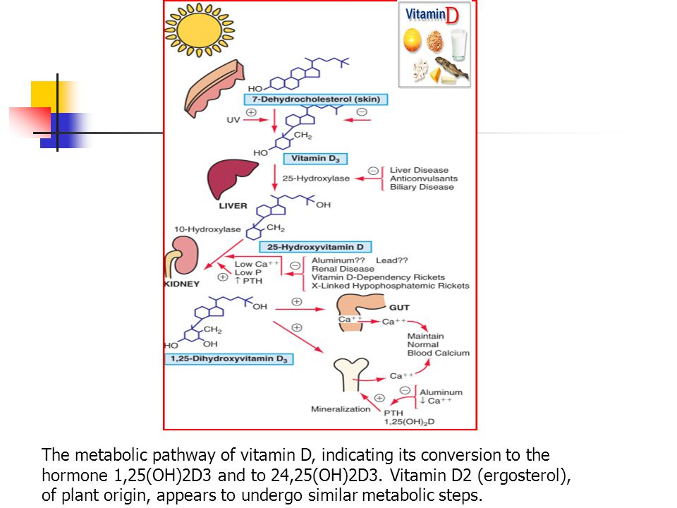 The metabolic pathway of vitamin D, indicating its conversion to the hormone 1,25(OH)2D3 and to 24,25(OH)2D3.