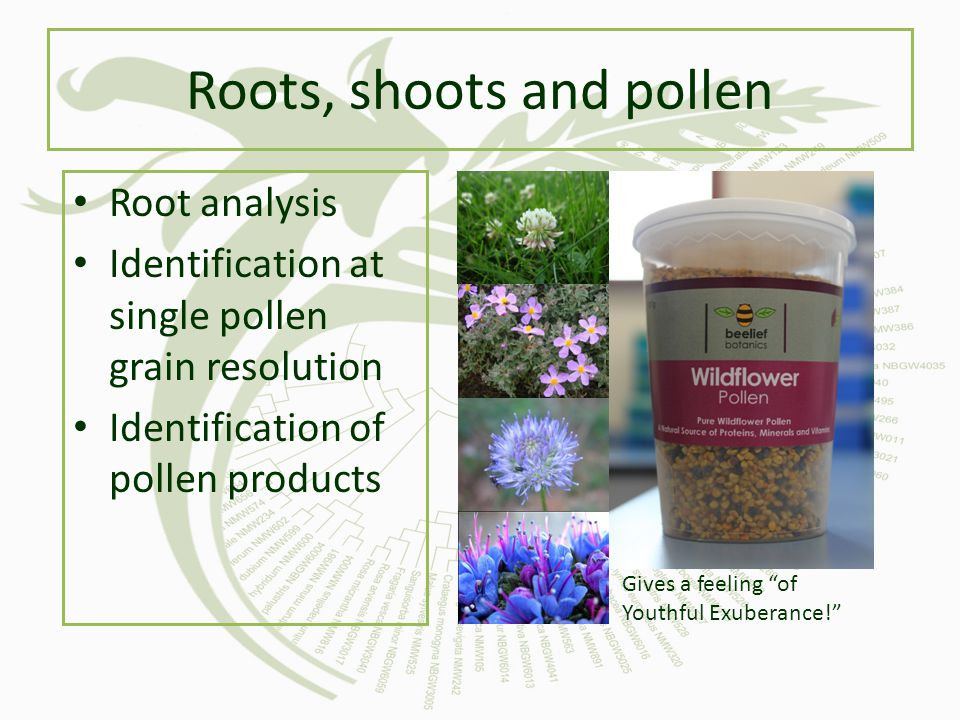 Roots, shoots and pollen
