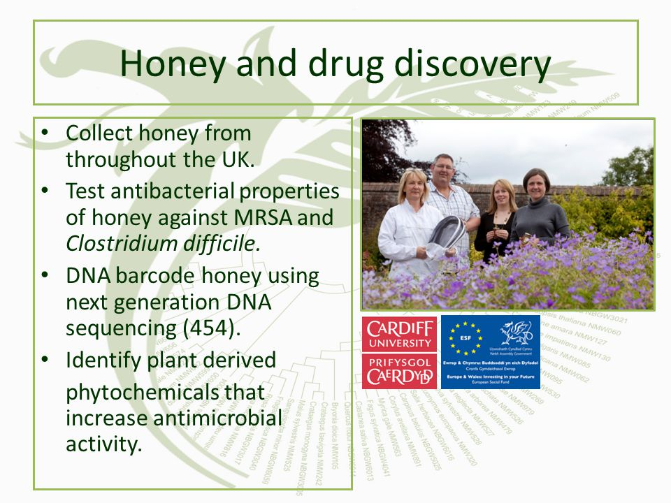Honey and drug discovery