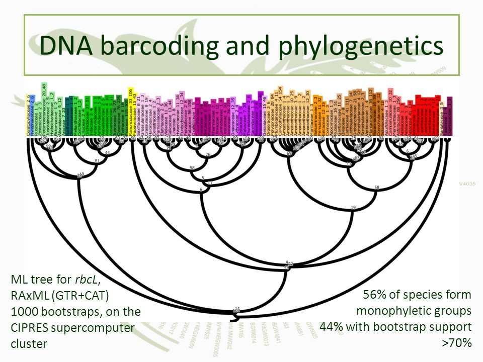 DNA barcoding and phylogenetics
