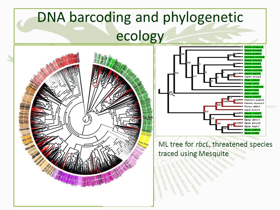 DNA barcoding and phylogenetic ecology