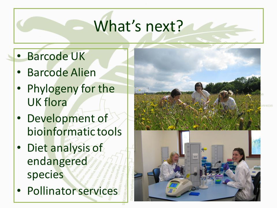 What's next Barcode UK Barcode Alien Phylogeny for the UK flora