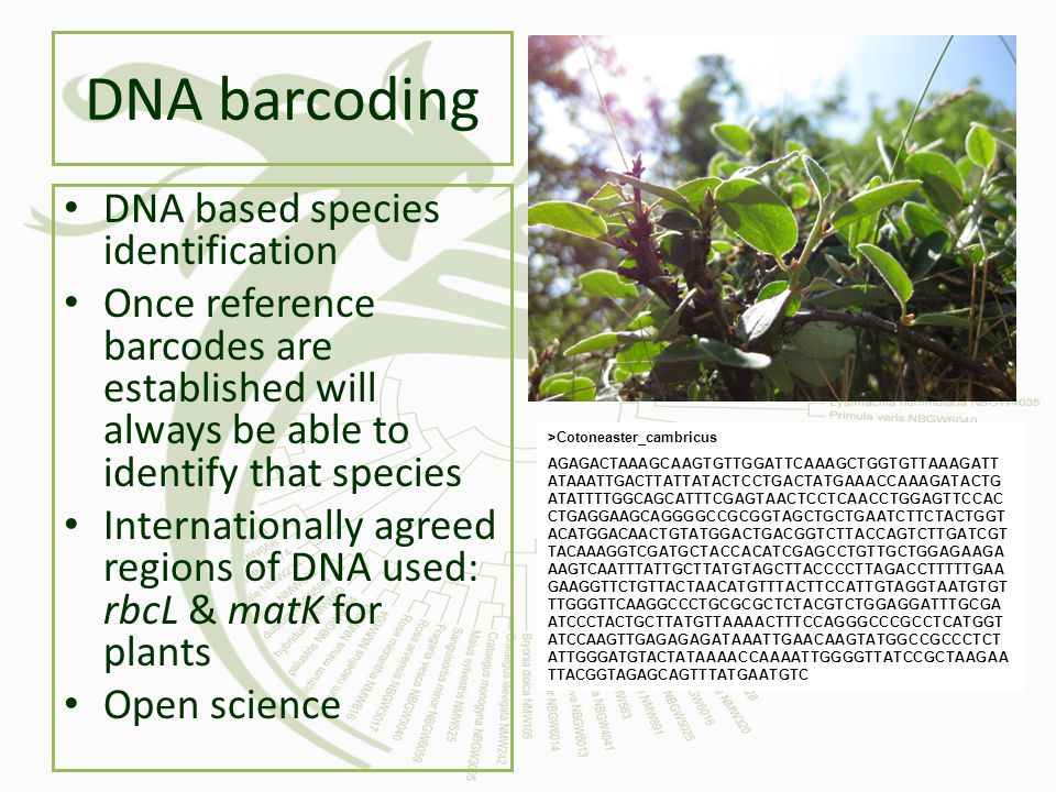 DNA barcoding DNA based species identification