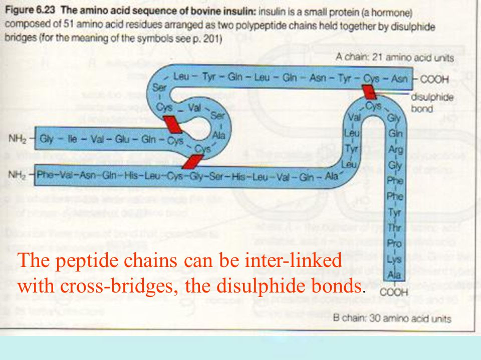 The peptide chains can be inter-linked