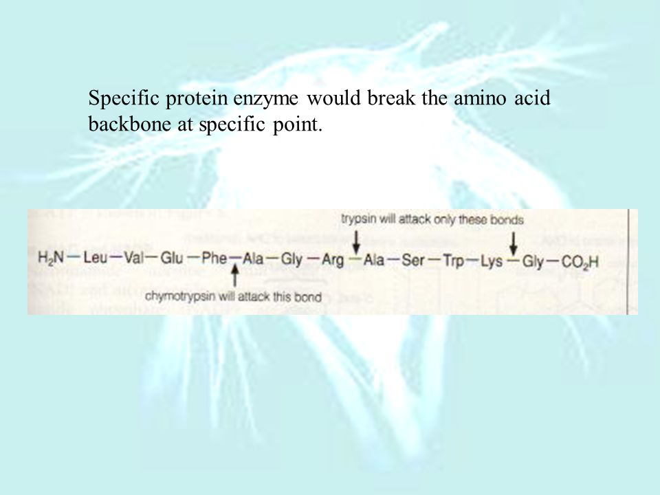Specific protein enzyme would break the amino acid