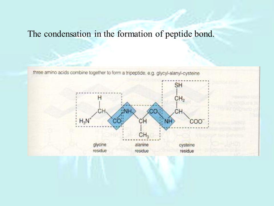 The condensation in the formation of peptide bond.