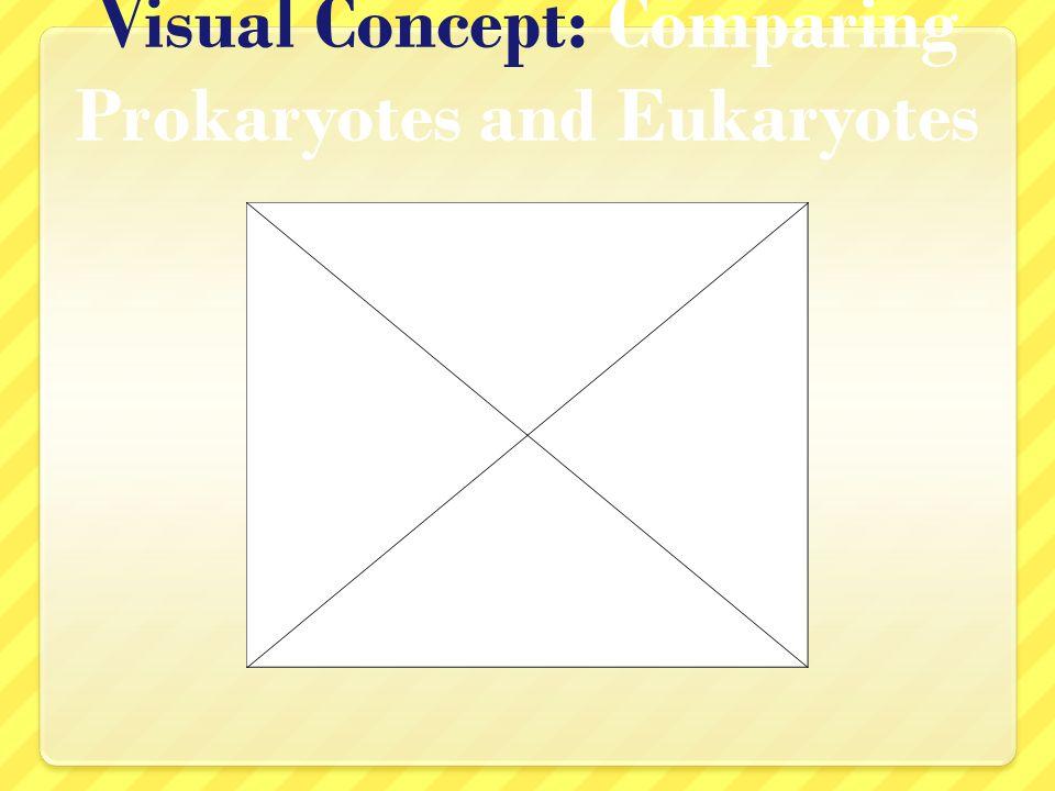 Visual Concept: Comparing Prokaryotes and Eukaryotes