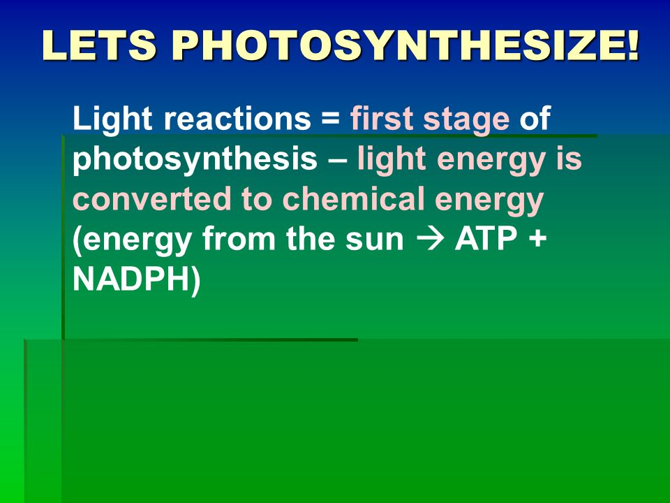 Lets Photosynthesize!