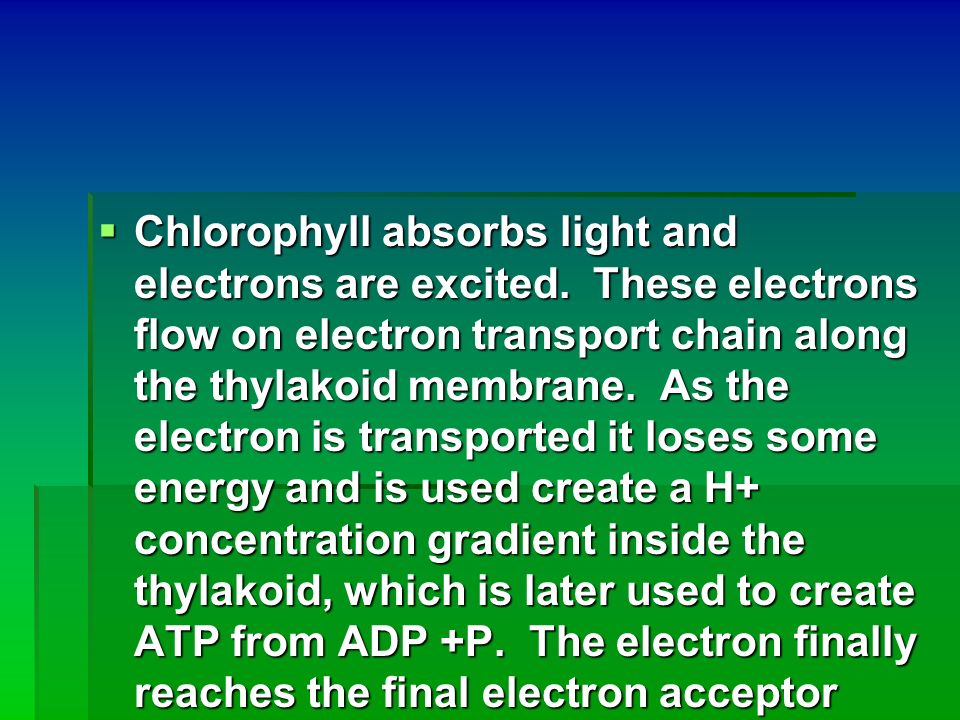 Chlorophyll absorbs light and electrons are excited