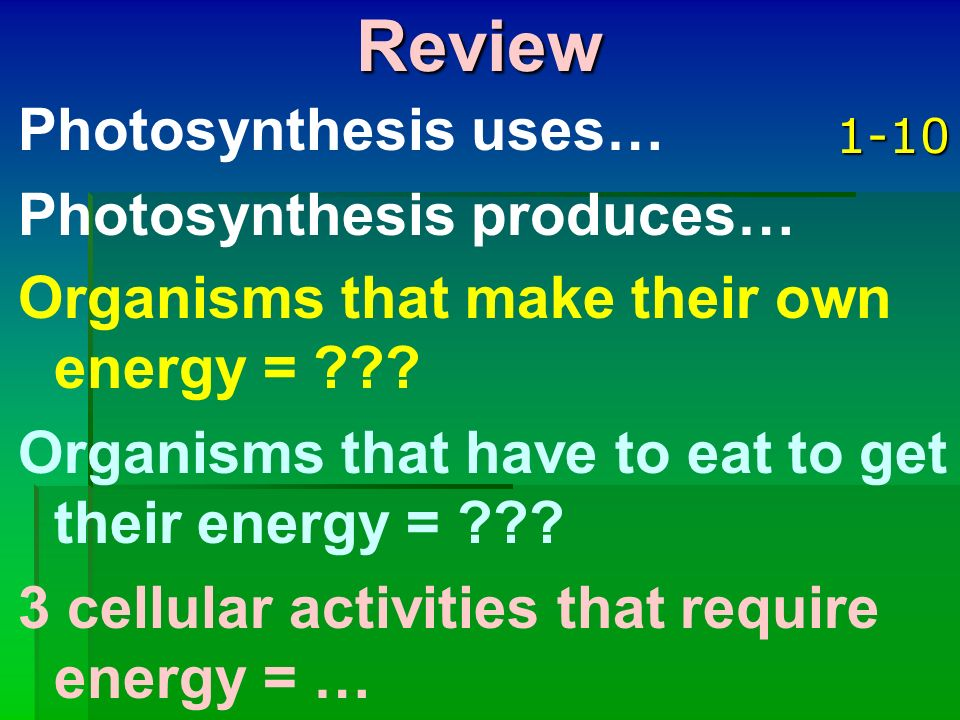 Review Photosynthesis uses… Photosynthesis produces…