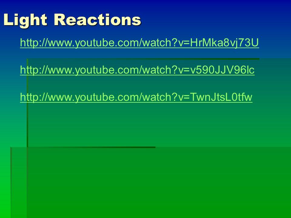 Light Reactions http://www.youtube.com/watch v=HrMka8vj73U