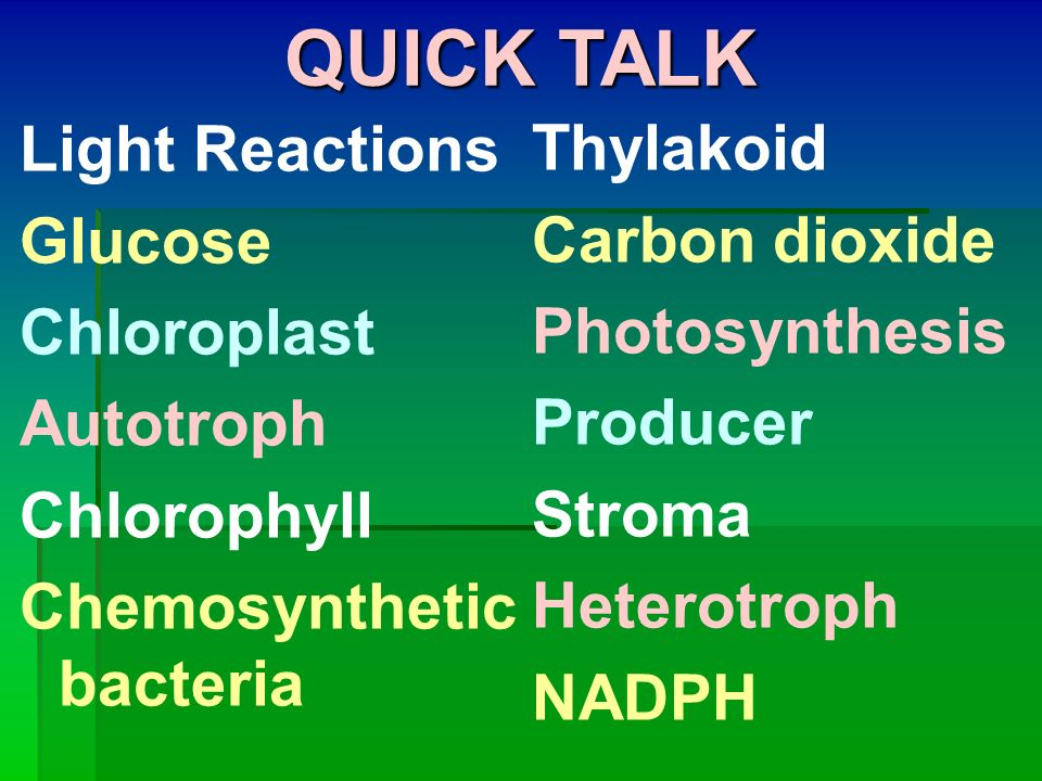 QUICK TALK Light Reactions Thylakoid Glucose Carbon dioxide