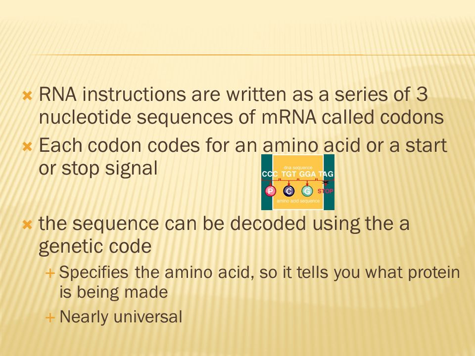 Each codon codes for an amino acid or a start or stop signal