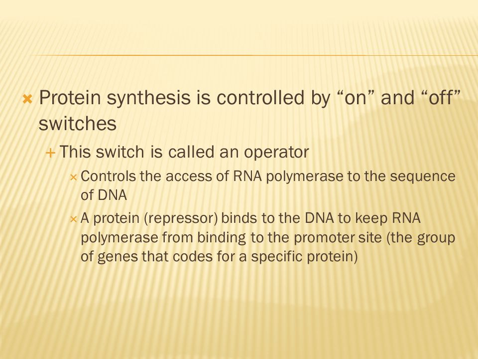 Protein synthesis is controlled by on and off switches