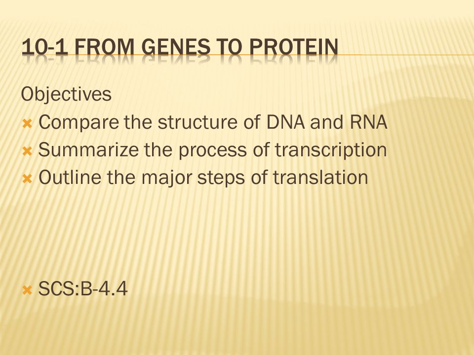 10-1 From Genes to protein Objectives
